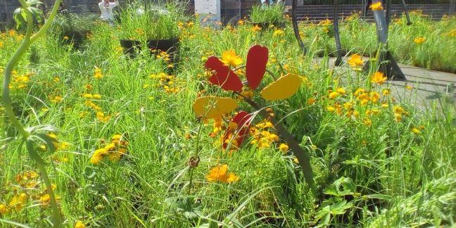 Petite Fleur Folies : un jardin pour les 50 ans de Yoplait